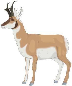 free vector Antelope Vector 1