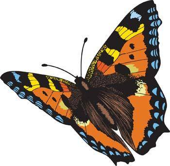 free vector Butterfly Vector 4