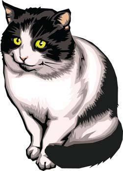 free vector Cat vector 6