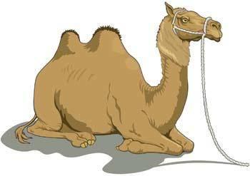 Camel Vector 1