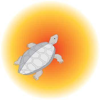free vector Turtle 7