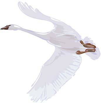free vector Swan 2