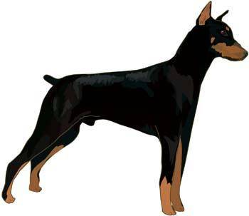 free vector Doberman Vector 7