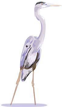 White egret vector 2