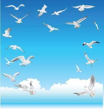 free vector Seagull vector 5