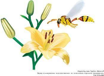 Bee 16