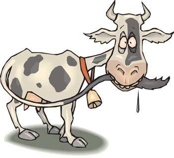 free vector Cow 13