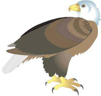free vector Eagle vector 7
