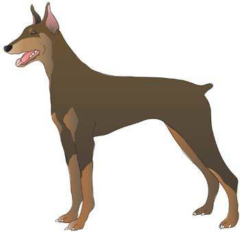 free vector Doberman Vector 8