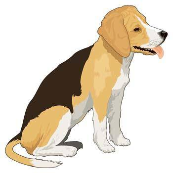 Dog collection vector 4