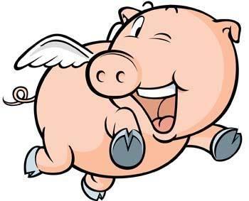 Pig 17