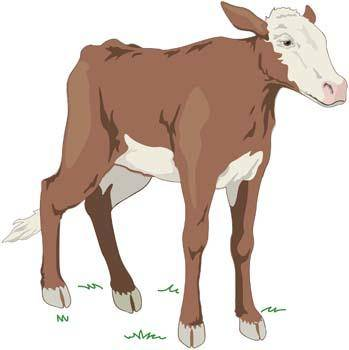 free vector Cow 5