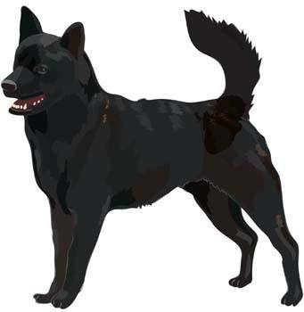 Dog Vector 50