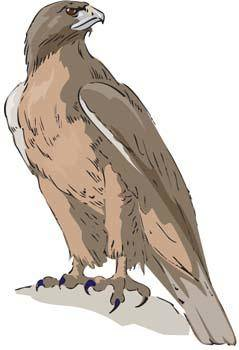 free vector Eagle vector 3