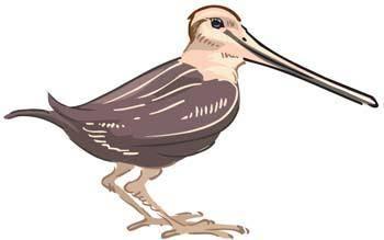 Vector burung