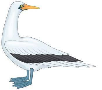 Seagull vector 3