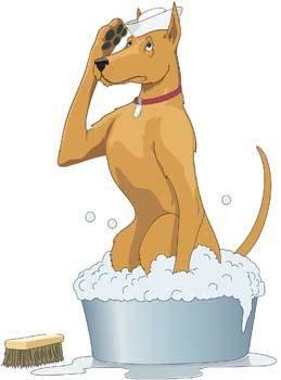 Dog Vector 17
