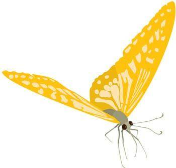 free vector Butterfly Vector 25