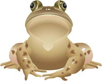 free vector Frog 12