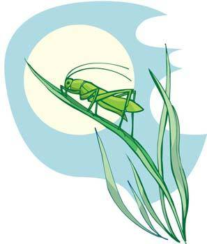 free vector Cricket 2