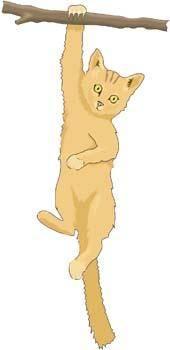 free vector Cat vector 47