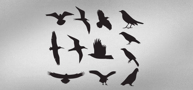 free vector Birds Silhouette Animal Bird Silhouette