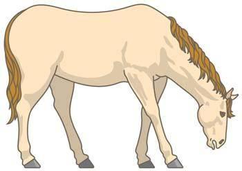 free vector Horse Vector 6