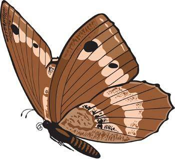 free vector Butterfly Vector 6