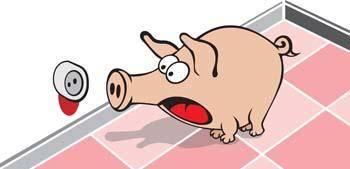 Pig 47