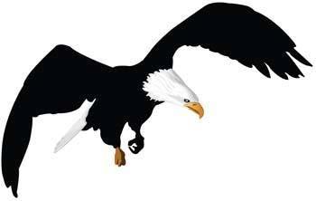 free vector Eagle vector 12