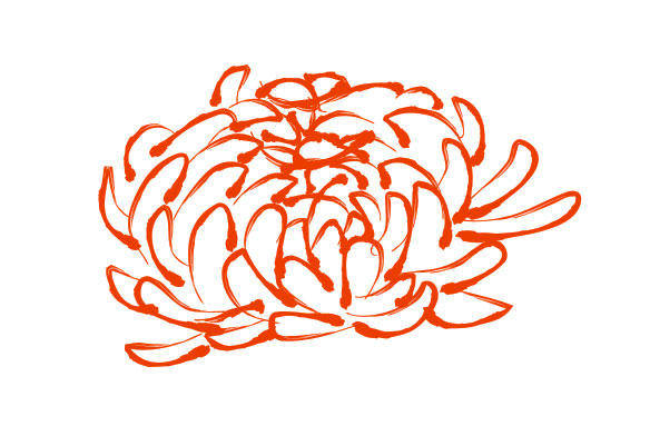 Chrysanthemum Pattern Vector Chrysanthemum
