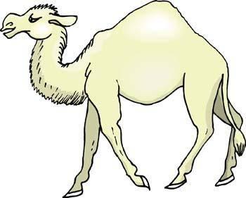 Camel Vector 6