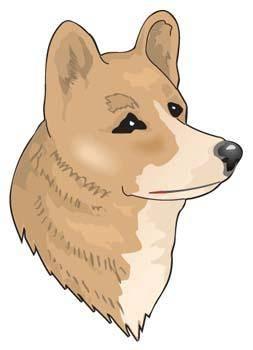 Morda Dog 1
