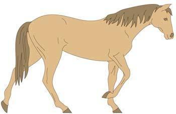 Horse Vector 5