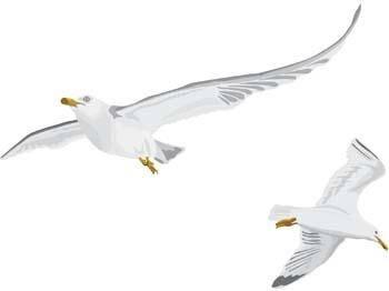 Seagull vector 6