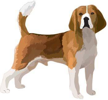Dog collection vector 7