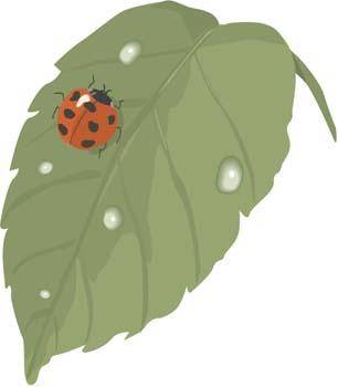 free vector Red Bugs 3