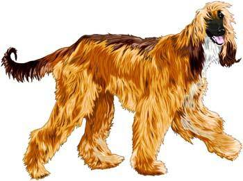 free vector Beautiful Dog Vector 1