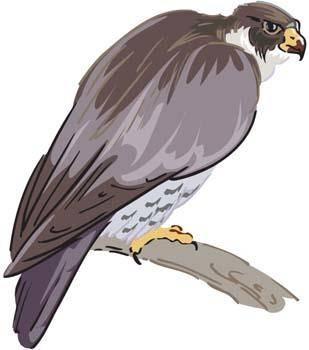 Eagle vector 4