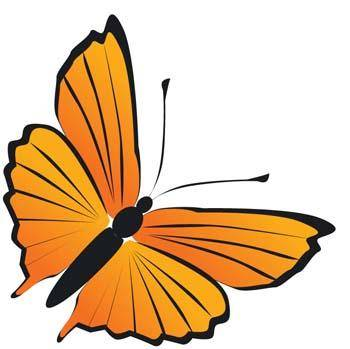 free vector Butterfly Vector 20