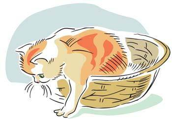 Cat vector 14