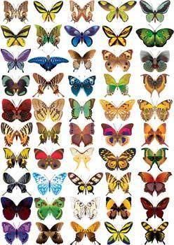 free vector Butterflies Vector 1