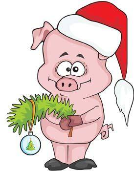 Pig 31
