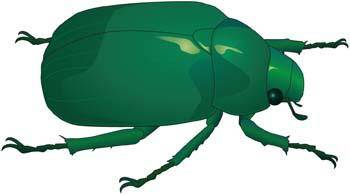 free vector Bugs 9