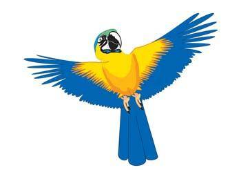 Myna bird 2