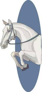 Horse Vector 7