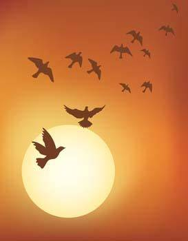 free vector Bird on the sky 2