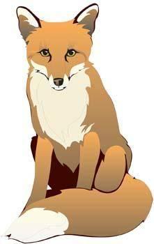 Fox Vector 13