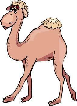 free vector Camel Vector 9
