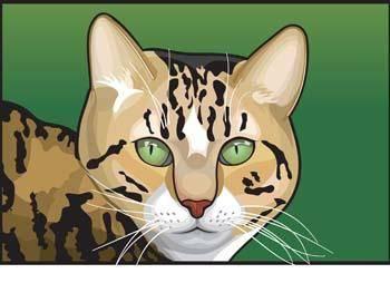 Cat Face vector 6